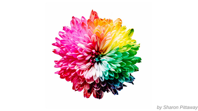 fiore con petali di tutti i colori