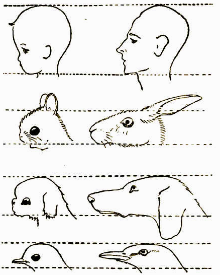 cachorros bebes adultos